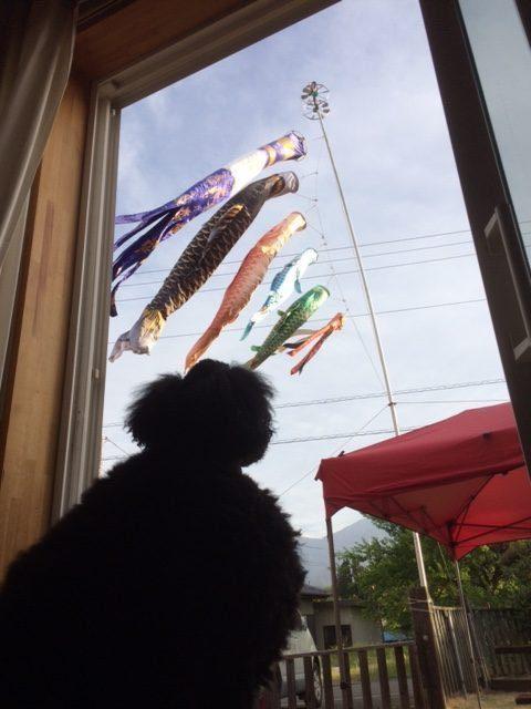 鯉のぼりとスタンプー
